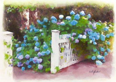 Garden Gate Hydrangeas
